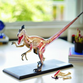 4-D Dinosaur Anatomy Model - Velociraptor